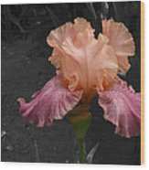 Iris2 Wood Print