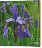 Irises Wood Print by Randi Shenkman