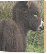 Irish Donkey Foal Wood Print