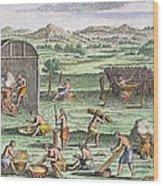 Iroquois Village, 1664 Wood Print