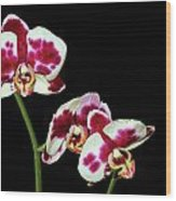 Isolated Orchids Wood Print