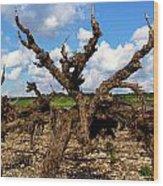 Israel's Countryside Wood Print by Gal Ashkenazi