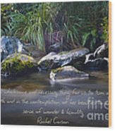 It Is A Wholesome....... Wood Print by Karen Lewis