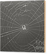 Itsy Bitsy Spider Wood Print