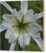 Ivory Star Wood Print