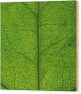 Ivy Leaf Wood Print