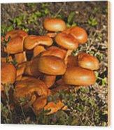 Jack Olantern Mushrooms 30 Wood Print