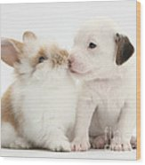 Jack Russell Terrier Puppy And Baby Wood Print