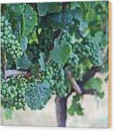 Jackson Triggs Winery 2 Wood Print