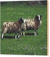Jacob Sheep Wood Print