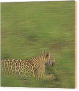 Jaguar Panthera Onca Running Wood Print