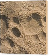 Jaguar Tracks Wood Print by Tony Camacho