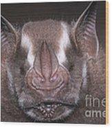 Jamaican Fruit Bat Wood Print
