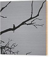 Jammer Bird Silhouette 1 Wood Print