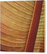 Jammer Blinds 001 Wood Print