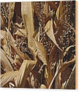 Jammer Corn Abstract 001 Wood Print