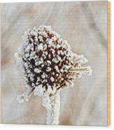 January Sunflower Wood Print