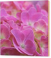 Japan, Kanagawa Prefecture, Sagamihara City, Close-up Of Pink Flowers Wood Print by Imagewerks