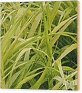 Japanese Forest Grass Wood Print