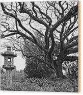 Japanese Lantern And Tree - Liliuokalani Park - Hilo Hawaii Wood Print