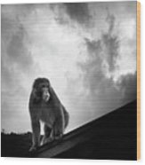 Japanese Macaque On Roof Wood Print by By Daniel Franco