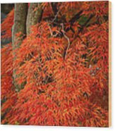 Japanese Maple In Autumn Wood Print