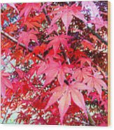 Japanese Maple Leaves 11 In The Fall Wood Print