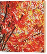 Japanese Maple Leaves 12 In The Fall Wood Print
