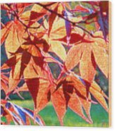 Japanese Maple Leaves 6 In The Fall Wood Print