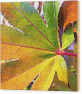 Japanese Maple Leaves 7 In The Fall Wood Print