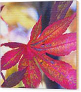 Japanese Maple Leaves In The Fall Wood Print