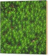 Japanese Moss Wood Print