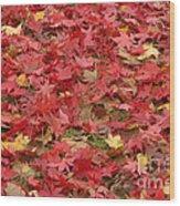 Japanese Red Maple Leaves Wood Print