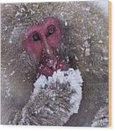 Japanese Snow Monkey Wood Print