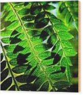 Jaqaranda Branches Wood Print by Catherine Natalia  Roche