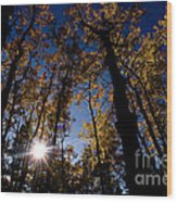 Jasper - Autumn Aspens Wood Print