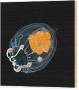 Jellyfish Leuckartiara Sp, Weddell Sea Wood Print