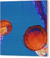 California Monterey Aquarium Jellyfish Exhibit  Wood Print