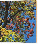Jewels Of Autumn Wood Print