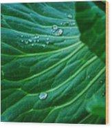 Jewels Of Water Wood Print