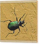 Jeweltone Beetle Wood Print