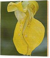 Jewelweed Flower 1 Wood Print