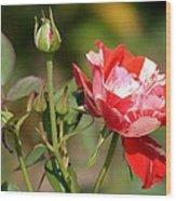 Jh Pierneef Rose Wood Print