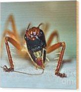 Jiminy Cricket Wood Print