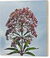 Joe-pye Weed Wildflower - Eupatorium Wood Print