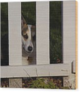 Johnny And The Picket Fence Wood Print