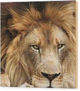Joseph Wood Print by Big Cat Rescue