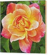 Joseph's Coat Rose Wood Print