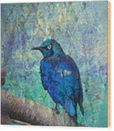 Josh's Blue Bird Wood Print