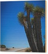Joshua Tree 4 Wood Print
